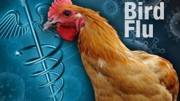 Bird Flu in Delhi