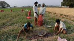 Modi govt allows farmers to buy seeds with old currency