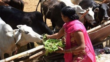 Centre bans on sale of cattle for slaughter, brings restrictions on cattle trade