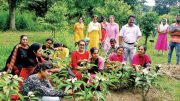 Students tie rakhis to trees, pledge to save them