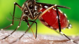 First dengue fatality in Delhi, 12-year-old boy dies: MCD
