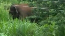 'Rogue' elephant, which killed 15 people, shot down by forest officials