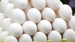 Contaminated eggs can compromise food safety.How to handle and store eggs