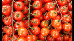 Cut BP risk, get glowing skin: 8 reasons to add tomato to your diet and beauty regime